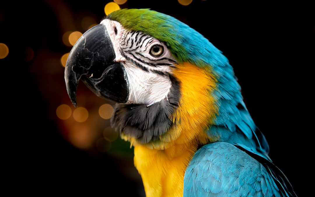 Fluffy The Macaw