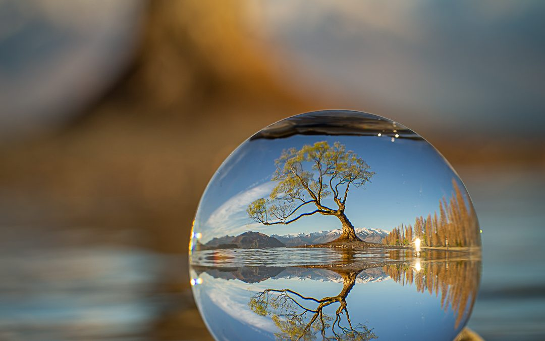 That Wanaka Tree In A Sphere