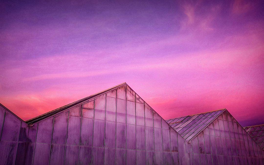 Pink Glasshouse